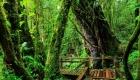 ang-ka-nature-trail-in-doi-inthanon-national-park-800x600