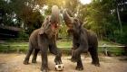 elephant-village-camp-experience-laos-tour-1